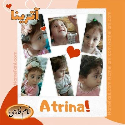 Atrina photo